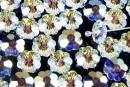 Swarovski, marguerite flower, AB, 12mm - x10