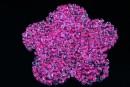Margele nisip, alb transparent cu roz, 2mm