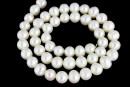 Freshwater Pearls - 7.5-8mmx6.5mm, White